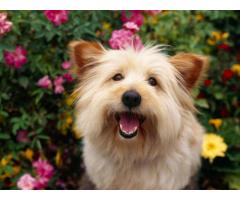 Warwick's Dogwalking and Grooming Service Oxford