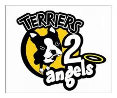 Terriers 2 Angels 121 Dog Training